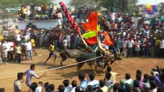 jallikattu-2018-tamilnadu-s-2nd-biggest-jallikattu-part-1---hosur