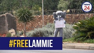 WATCH: Protesters want sad, lonely Joburg Zoo elephant to be relocated