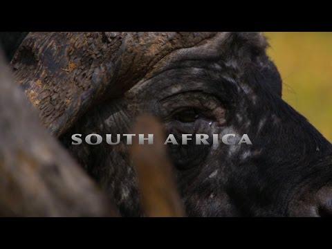 Blaser R8 South Africa