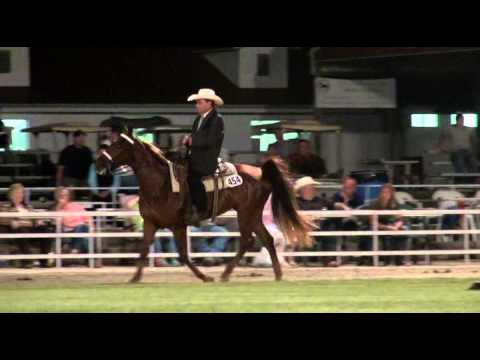 Missouri Fox Trotter  2015 Futurity 3 Year Old Futurity Mares-Open