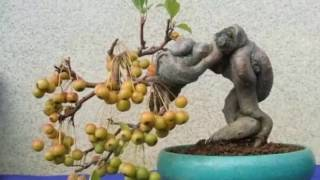 Fruit Bonsai 水果盆景