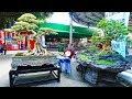 Gambar cover Bonsai Exhibition Vietnam -15th ASPAC - Asia Pacific Bonsai And Suiseki Bonsai Exhibition Part 2