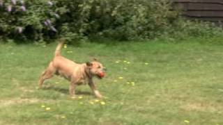You And Your Border Terrier: The Essential Guide; Running