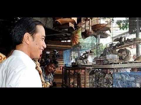Burung - Pasar Burung Legen Jatinom Klaten - Murai - Pleci - Love Birds - Kenari