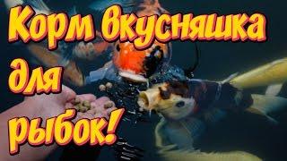 Корм для аквариумных  рыбок своими руками! Простой рецепт!