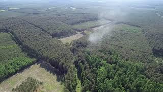 Czarna: Pożar lasu, spłonęło 1,5 hektara. W akcji 9 zastępów straży pożarnej