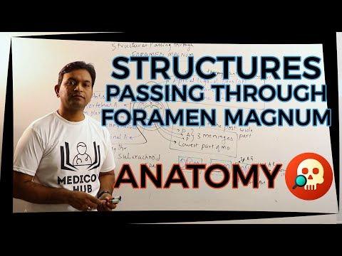 ANA.HNB.014: Structures passing through Foramen Magnum | Anatomy | Dr. Prashant Sharma
