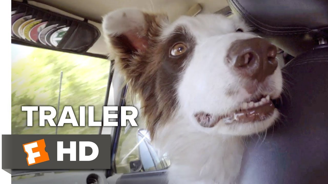 The Stray Trailer #1 (2017) | Movieclips Indie