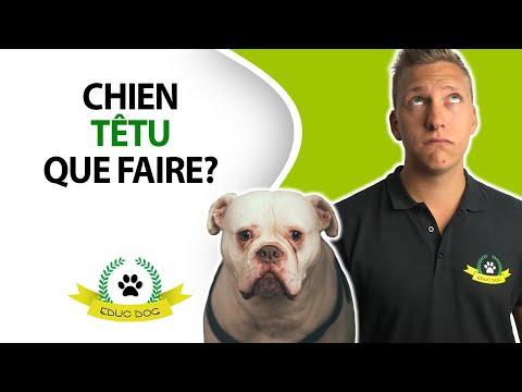 Collier Anti Aboiement A La Citronnelle - Astuces - Blog chien