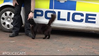 Thames Valley Police announces brand new cat unit #PoliceCats