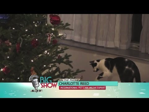 Preparing Your Pets for the Holidays: Michigan's Big Show