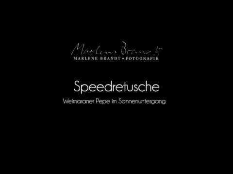 Speedretusche #1 Hundefotografie   Marlene Brandt - Fotografie