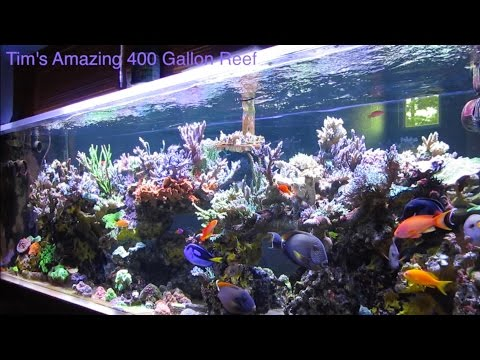 Tim's Amazing Journey with his Beautiful 400 Gallon Reef - AmericanReef Reef Keeping Video