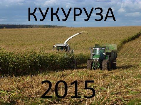 Заготовка кукурузы 2015. Harvesting corn 2015.