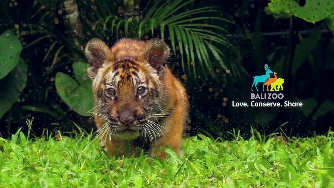 Welcome To Bali Zoo Youtube