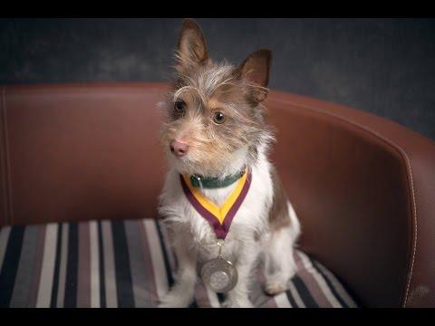 Harry - Jack Russell Terrier - 3 Weeks Residential Dog Training
