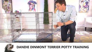 Dandie Dinmont Terrier Potty Training from WorldFamous Dog Trainer Zak George, Dandie Dinmont Puppy