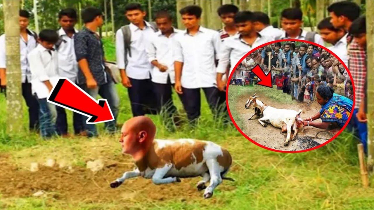 कुत्ते जैसा बच्चा कहाँ पैदा हुआ है    Kutte Jaisa Bacha Kaha Paida Hua Hai