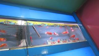 BioResearch in SM MegaMall (Pet Store) Part 1/3