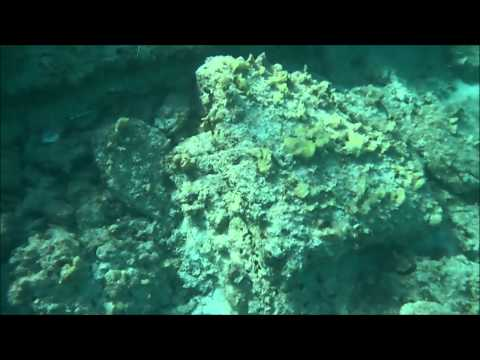 Grand Turk 2015 Pillory Beach Snorkel