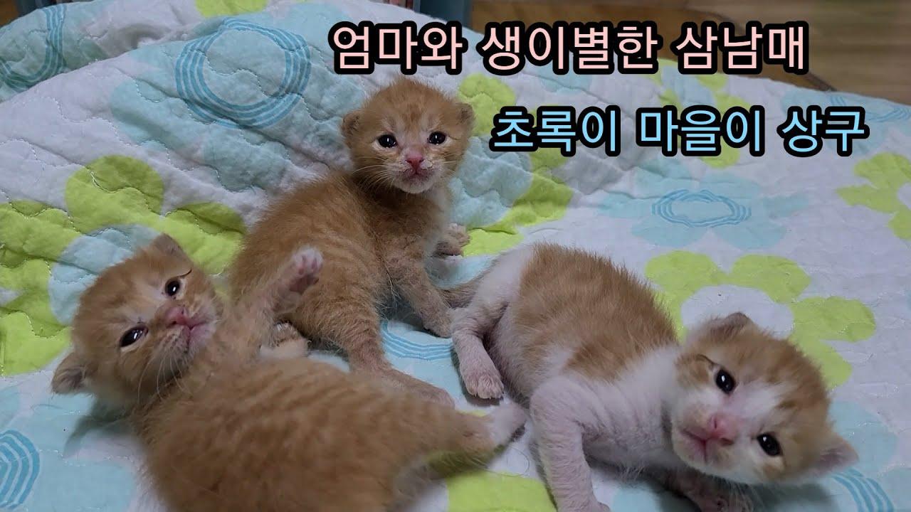 엄마와 생이별한 삼남매/초록이 마을이 상구