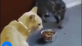 Умереть от смеха,проделки котов и кошек. Tricks of cats and cats.
