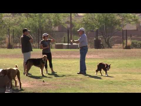 Chandler Dog Parks