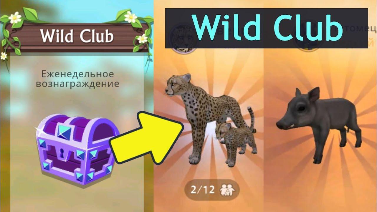 Wildclub