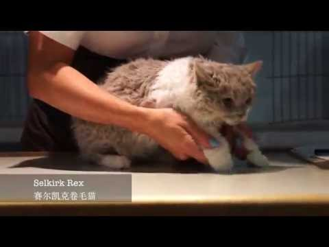 2016 September TICA Cat Show Vlog in Deland, Florida