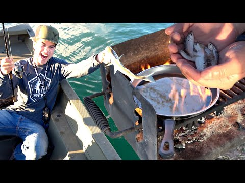 FISH EVERYWHERE! Let's Catch N Cook Some! Lake Mead Fishing