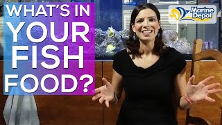 What's In Your Fish Food?! | Aquarium Nutrition with a Marine Biologist and an Aquatic Veterinarian