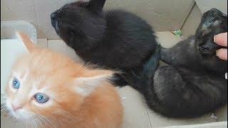 Нашли котят - проверяем вес.