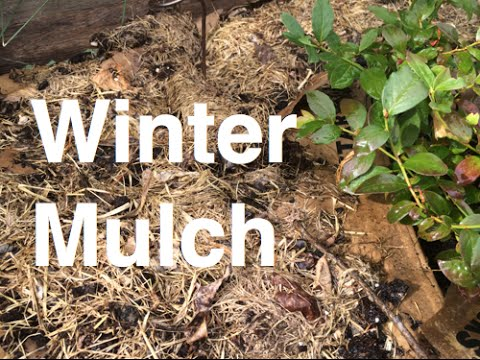 Mulching Garden Beds For Winter Organic Easy And Using Comfrey Used Coffee Grounds Paper