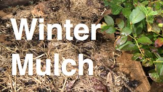 Mulching Garden Beds for Winter Organic Easy and Cheap using Comfrey Used Coffee Grounds and Paper