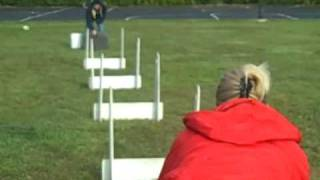 Flyball - Chicago Dog Training