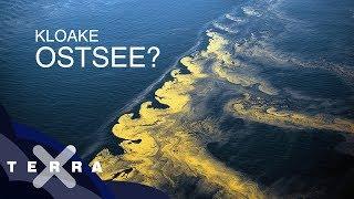 Ist die Ostsee noch zu retten?   Dirk Steffens