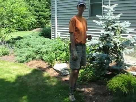 landscape-design-project-review-in-rensselaer-county,-ny