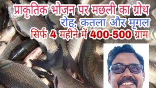 मछली की बढ़वार बिना फीड के Fish growth on Natural feed and Introduction