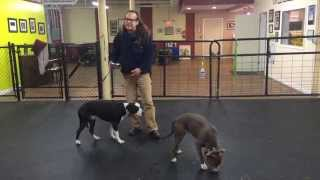 Aggression Rehab Solid K9 Training