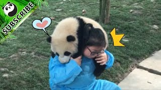 【Panda Top3】Undoubtedly the luckiest nanny in the world