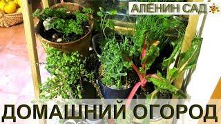 Как организовать домашний огород в квартире? / Что в моем огороде
