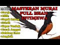 Masteran Murai Batu Full Isian Mewah  Mp3 - Mp4 Download