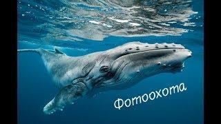 Невероятное видео китов снятое с  маленькой лодки в Индийском океане. Шри Ланка. # ПутешествЮлька