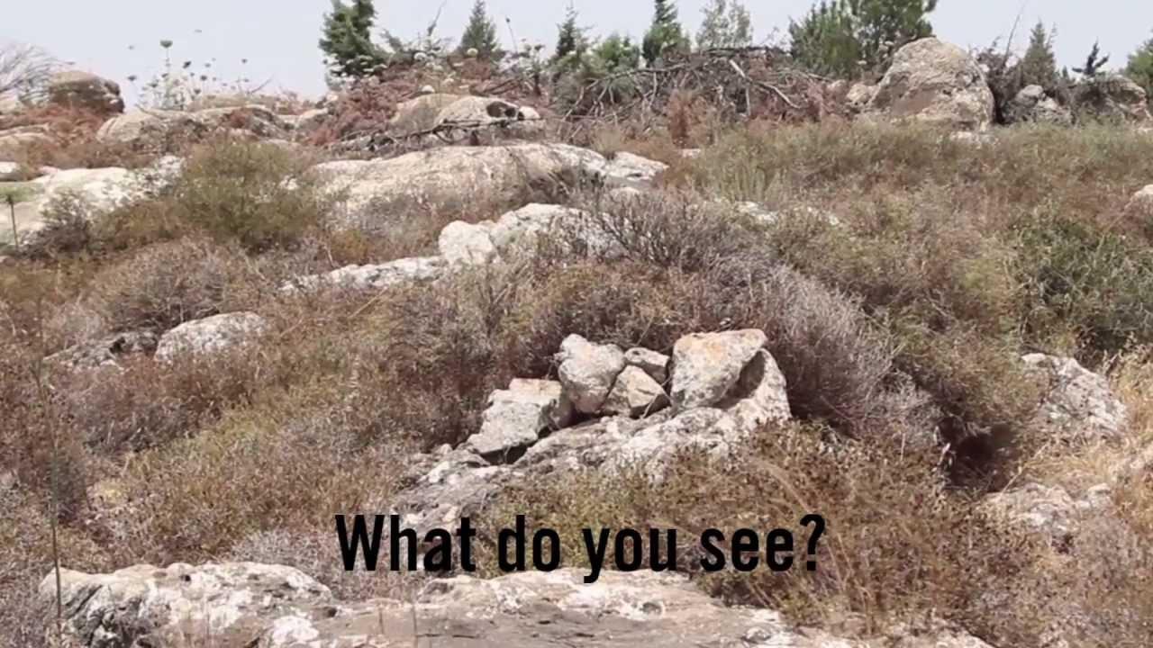 The Artof Camouflage