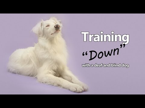 Teaching 'Down' With Your Deaf and Blind Dog