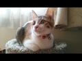 猫の日 ニャンニャンニャーン mp3
