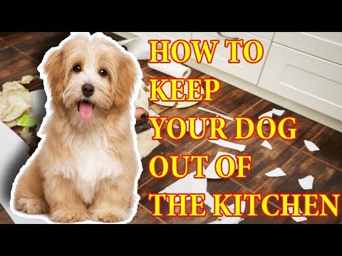 dog-training-tips-||-how-to-keep-dog-out-of-the-kitchen-???
