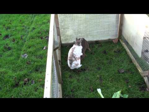 Rabbit Bonding, An Unsuccessful Outcome - Please Read Description