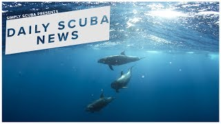 Daily Scuba News - Tourists Who Swim With Dolphins Are Making Them Vulnerable