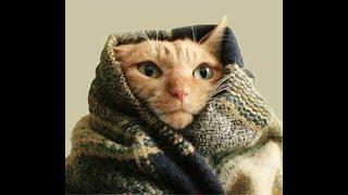 Изумительно смешные кошки! Подборка приколов с кошками, котами и котятами
